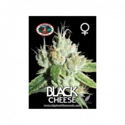 BLACK CHEESE 5 100 BIG...