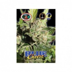 BLUE CHEESE 5 100 BIG...