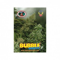 BUBBLE CHEESE 5 100 BIG...