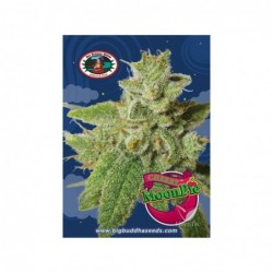CHERRY MOON PIE 5 100 BIG...