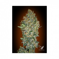 CHEESE BERRY 5 100 00 SEEDS